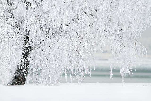 winter-1367153_640.jpg