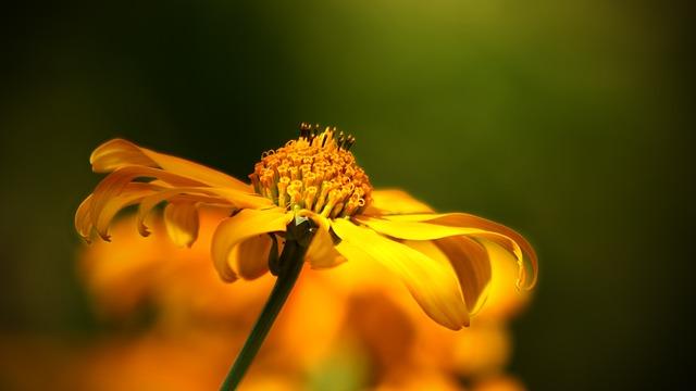 flower-52268_640.jpg